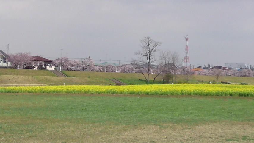多摩川河川敷.jpg