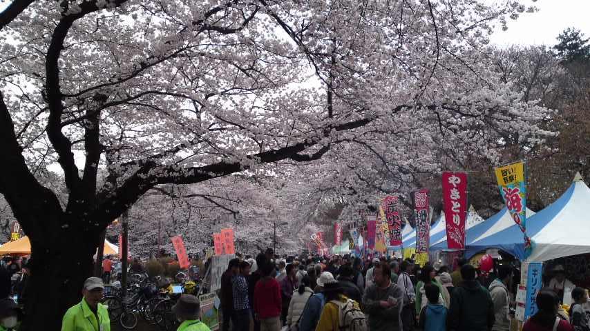 小金井サクラ祭1.jpg